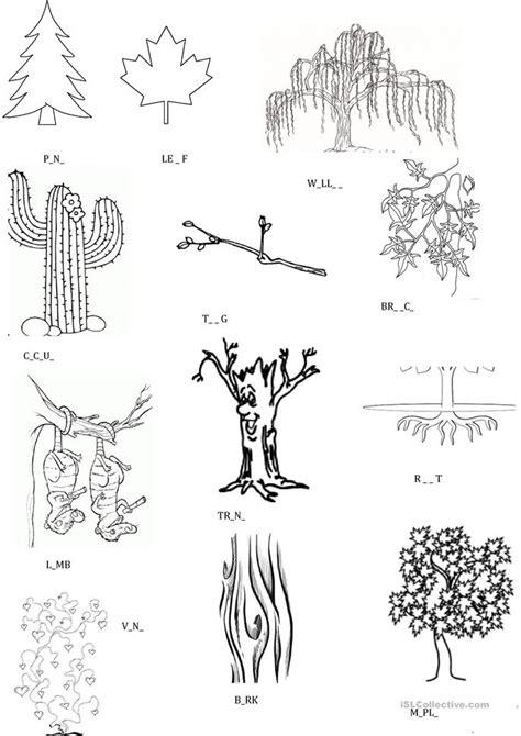 esl plants worksheets
