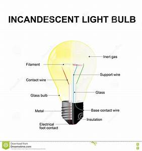 Cfl Light Bulb Diagram