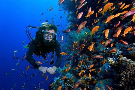 tiger blue the ultimate sea safari sailing eastern indonesia