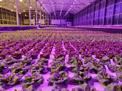 ge current  daintree company expands horticulture