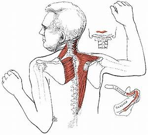 pain medication for muscle spasms