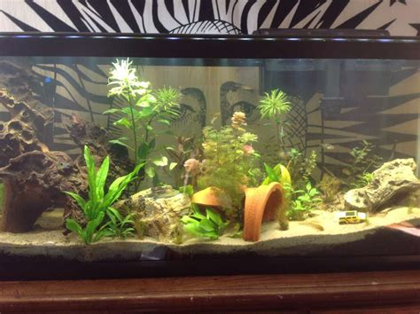 installation aquarium eau douce aquarium eau douce substrat