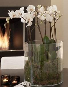 Orchideen Im Glas Dekorieren : elegante wei e orchideen in einer glasvase verleihen ihrem ~ Watch28wear.com Haus und Dekorationen