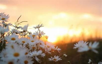 Sunrise Wallpapers Morning Flowers Pixelstalk