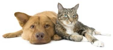 dogs that are with cats crown veterinary services specialty referral 24 hour