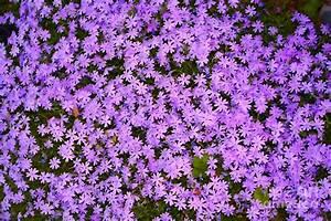 Purple Flower Cover Photograph by Susan Stevenson