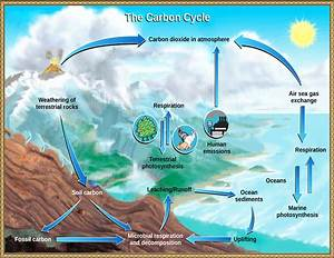 Carbon Cycle Usgs  Geography  Diagrams  Carbon Cycle Usgs