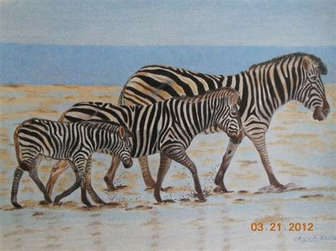 Africa's Striped Horse