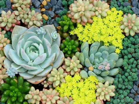 The Spectacular World of Succulents   World of Succulents