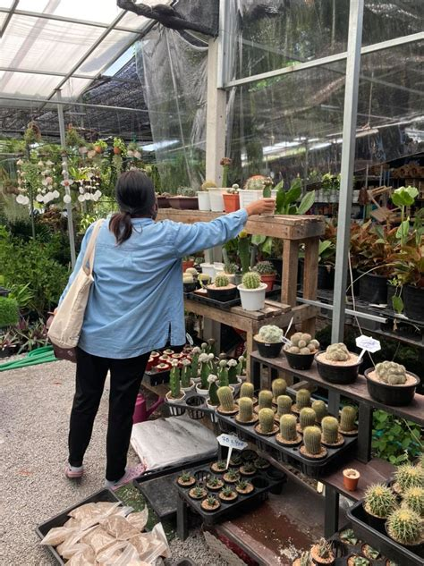 ห้องแคคตัส Room Cactus - Posts   Facebook