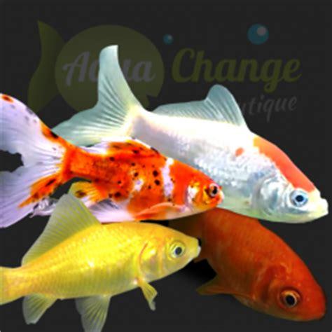 achat en ligne de poissons crevettes d aquarium aquachange boutique