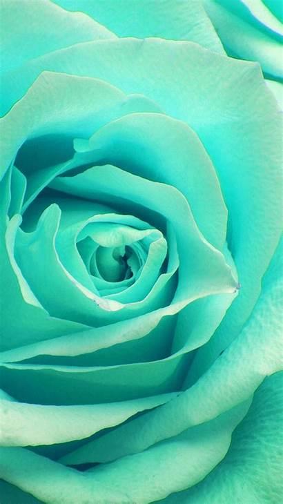 Zoom Rose Flower Greeb Ne45 Papers