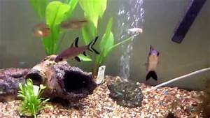 Fluval Vicenza 260 : fluval vicenza 260 aquarium youtube ~ Orissabook.com Haus und Dekorationen