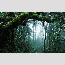 Download Jungle Hd Backgrounds Free Pixelstalknet