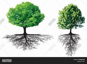 Trees Roots Vector & Photo | Bigstock