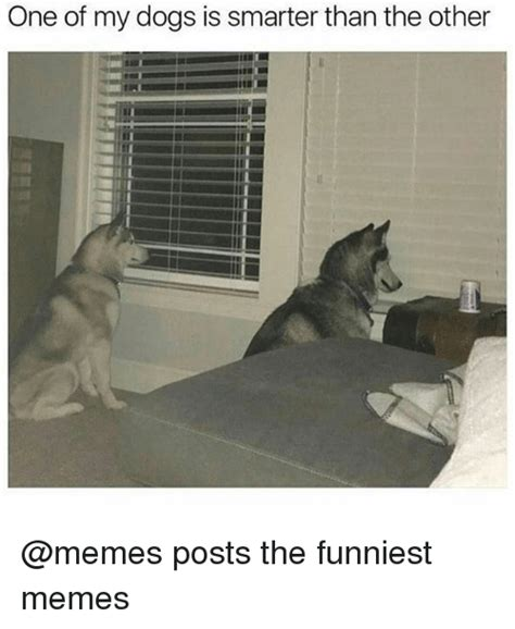 The Funniest Memes - one of my dogs is smarter than the other posts the funniest memes dogs meme on sizzle