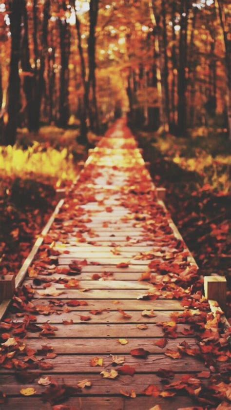 Aesthetic Simple Fall Iphone Wallpaper by 46 Best Wallpaper Images On Backgrounds Phone
