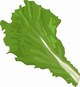 Lettuce clipart 4 image #35973