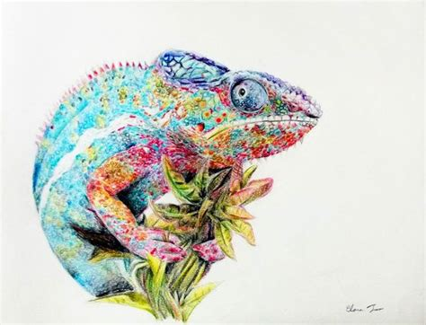 colored pencil drawing chameleon original animal art