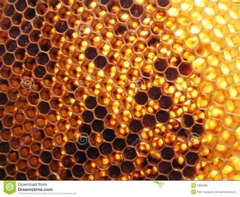 Favo de mel imagem de stock Imagem de hive closeup