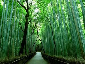 The Bamboo Forest at Arashiyama Park, located in Kyoto
