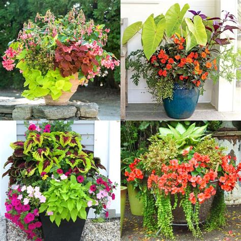 best shade plants 30 gorgeous container garden planting lists a of rainbow