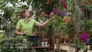 Comment Soigner Une Orchidée : comment arroser et cultiver une orchid e l 39 entretien des ~ Farleysfitness.com Idées de Décoration