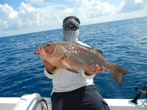 grouper definition wallpapers