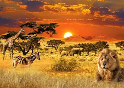 naykrashchi safari zapovidniki vdoma velikoi pyatirki