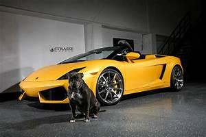 Find Lamborghini Gallardo Spyder To Pics G9x And ...