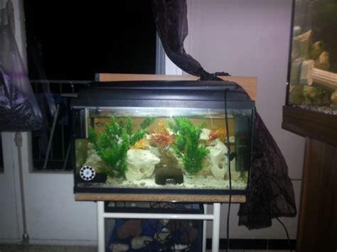 aquarium 60l pas cher recherchez vente ou occasion animaux annonce gratuite sur marche fr