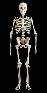 Human Skeleton Stock Photo - Download Image Now