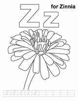Coloring Zinnia Pages Printable Flower Handwriting Zinnias Letter Flowers Practice Colouring Preschool Bestcoloringpages Sheets Letters sketch template