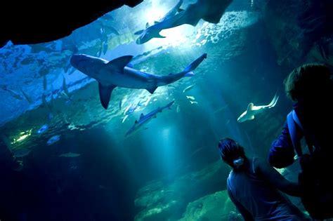 aquarium de happily wiggles select