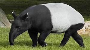 introduce of Rare Animals — Steemit