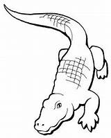 Coloring Pages Florida Gators Razor Drawing Template Polaris Printable Alligator Paintingvalley Draw sketch template