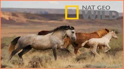 horses wild north bbc animals native american documentary wildlife