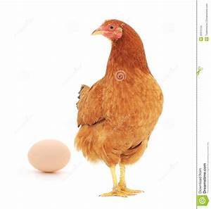 Brown hen with egg stock photo. Image of meat, feathers ...