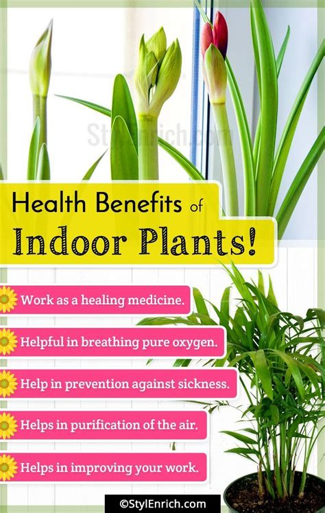 indoor plants  natural air purifiers   house