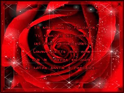 Rose Amitie Angel Centerblog Merci Roses Une