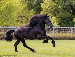 Arabian show horse described as 'horrific' by experts ...