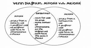 Mitosis Vs  Meiosis Venn Diagram Comparing And