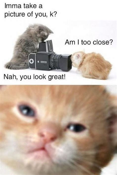 Best Animal Memes - funny cute animals memes www pixshark com images galleries with a bite