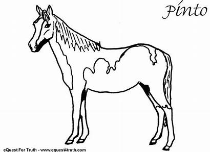 Coloring Horse Pages Pinto Horses Embroidery Funny