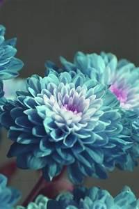 blue flowers on Tumblr