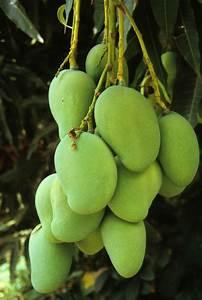 17 Best images about Caribbean Fruit ~ Spices - Vegetables ...