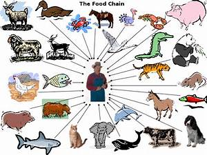 Food Chain For Kids  Task