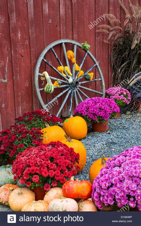 fall mums fall scene with wagon wheel pumpkins and mums in the finger lakes stock photo royalty free
