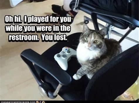 cute cat lost playing  video game funny cute video