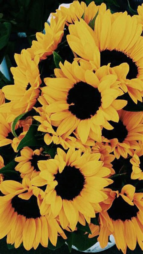 Aesthetic Yellow Flowers Wallpaper Iphone by Image Result For Sunflower Wallpaper Iphone 7 Sunflower